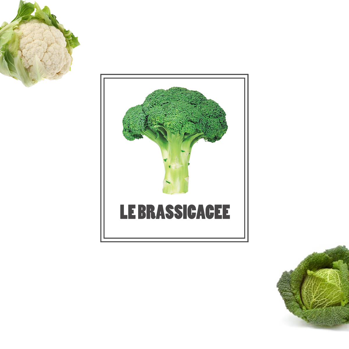 Le brassicacee